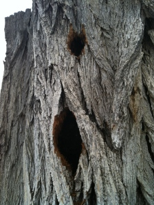 Flickers Nest